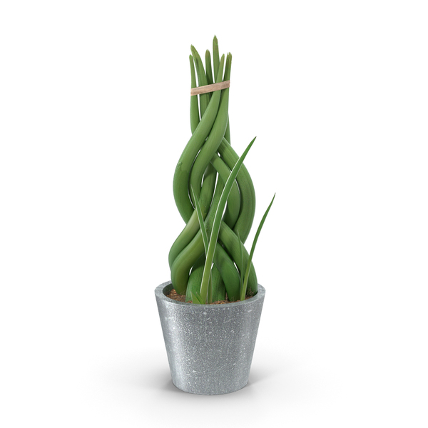 Potted Woven Plant PNG & PSD Images