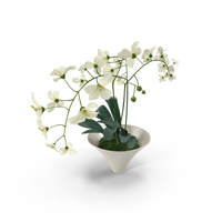 White Flowers in White Pot PNG & PSD Images