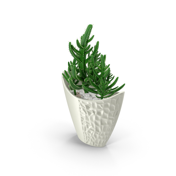 Cactus in Pot PNG & PSD Images