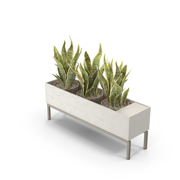 Standing Planter PNG & PSD Images