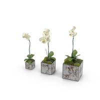 Orchids in Planters PNG & PSD Images