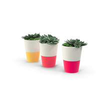 Potted Succulents PNG & PSD Images