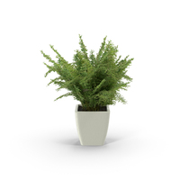 Potted Fern PNG & PSD Images