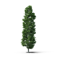 Green Leaf Tree PNG & PSD Images