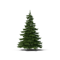 Spruce Tree PNG & PSD Images
