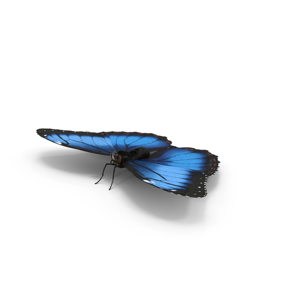 Blue Morpho Butterfly PNG & PSD Images