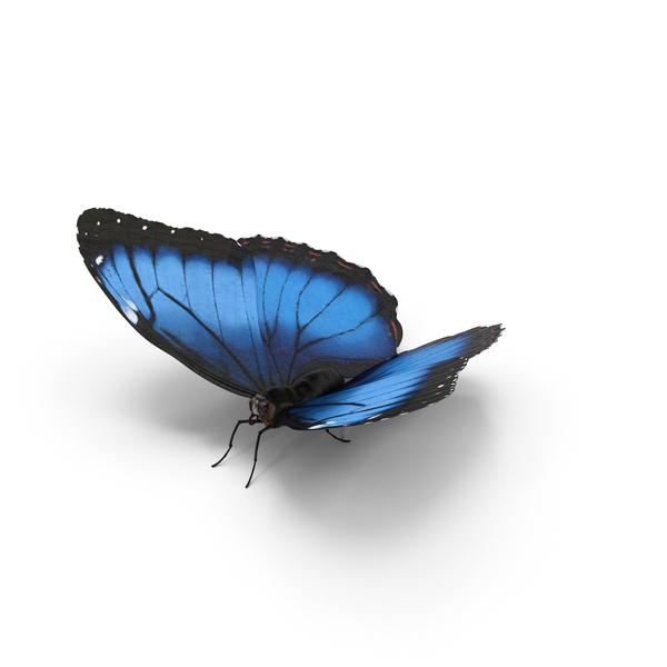 Blue Morpho Butterfly Object