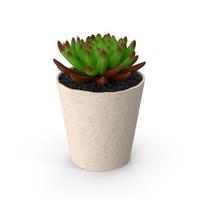 Succulent PNG & PSD Images