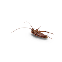Dead Cockroach PNG & PSD Images