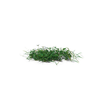 Simple Grass Medium PNG & PSD Images