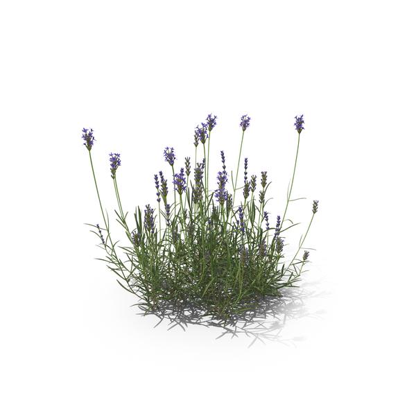 Lavender Object