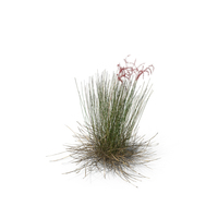 Feather Grass PNG & PSD Images