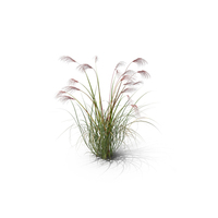 Chinese Silver Grass PNG & PSD Images