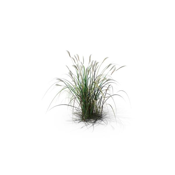 Amur Silver-Grass PNG & PSD Images