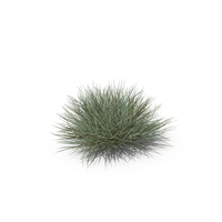 Bulbous Oat Grass PNG & PSD Images