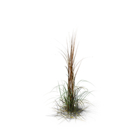 Giant Miscanthus PNG & PSD Images