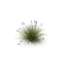 Foxtail Fountain Grass PNG & PSD Images
