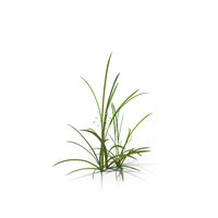 Quaking-Grass PNG & PSD Images
