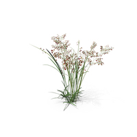 Pearl Grass PNG & PSD Images