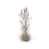 Sheep Fescue PNG & PSD Images