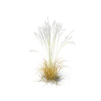 Tall Moor Grass PNG & PSD Images