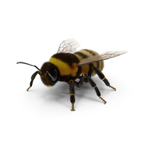 Bumblebee PNG & PSD Images