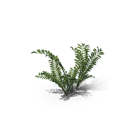 Silverweed PNG & PSD Images