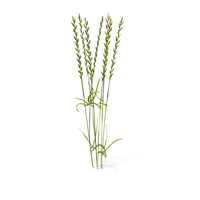 Perennial Rye-Grass PNG & PSD Images