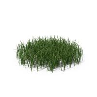 Simple Grass (Medium) PNG & PSD Images