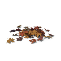 Pile of Maple Leaves PNG & PSD Images