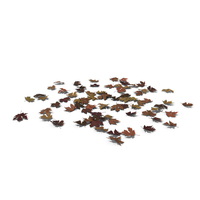 Fallen Maple Leaves PNG & PSD Images