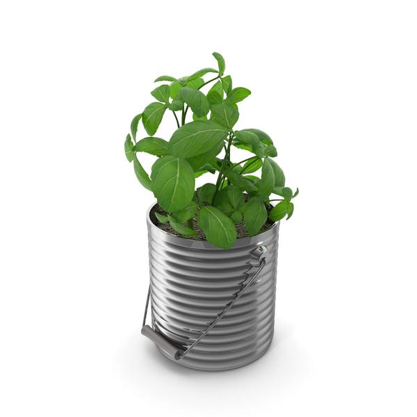 Basil Plant PNG & PSD Images