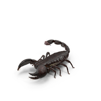 Scorpion PNG & PSD Images