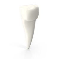 Pre-Molar Tooth PNG & PSD Images