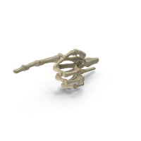 Posed Skeletal Hand PNG & PSD Images