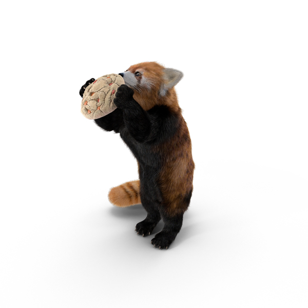 Red Panda With Cookie Object