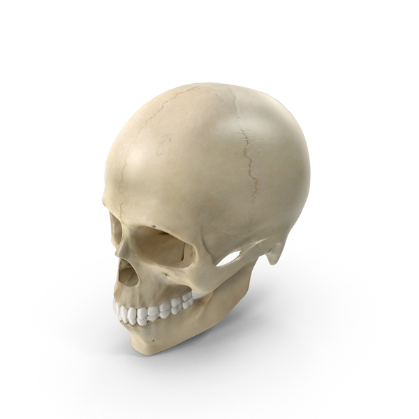 Female Skull PNG & PSD Images