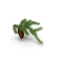 Pine Tree Sprig PNG & PSD Images