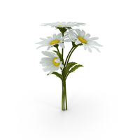 Daisies PNG & PSD Images