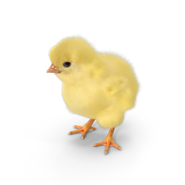 Chick Object
