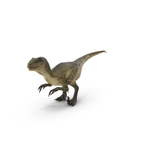 Deinonychus PNG & PSD Images