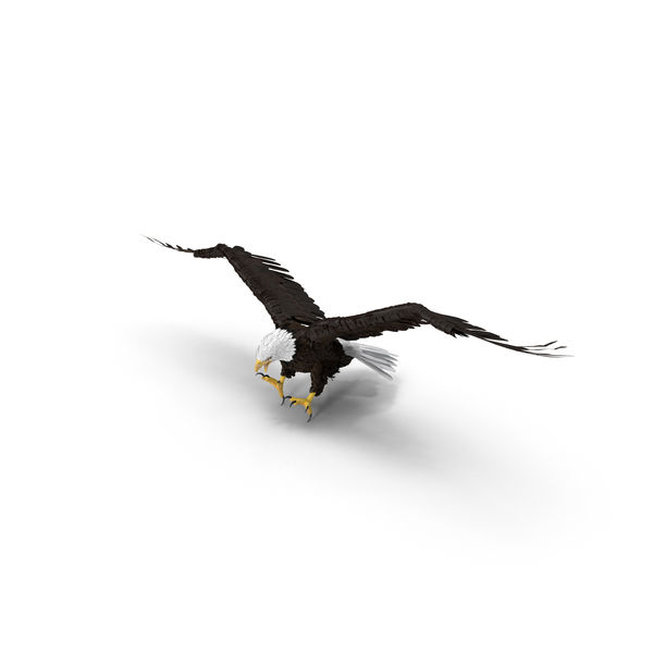 Bald Eagle Attacking Object
