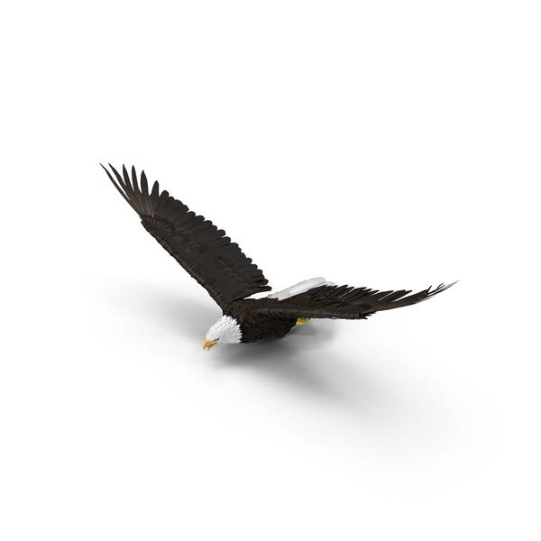 Bald Eagle Flying Object