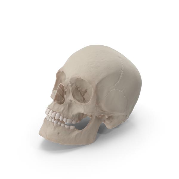 Skull Resting PNG & PSD Images