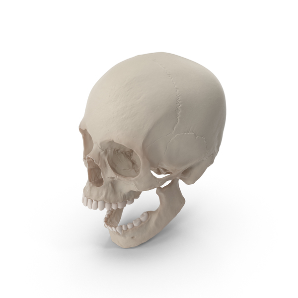 Skull PNG & PSD Images