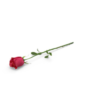 Rose PNG & PSD Images