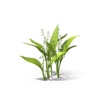 Lily of the Valley PNG & PSD Images