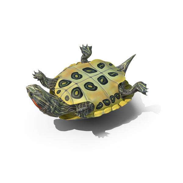 Pond Slider Turtle  Object
