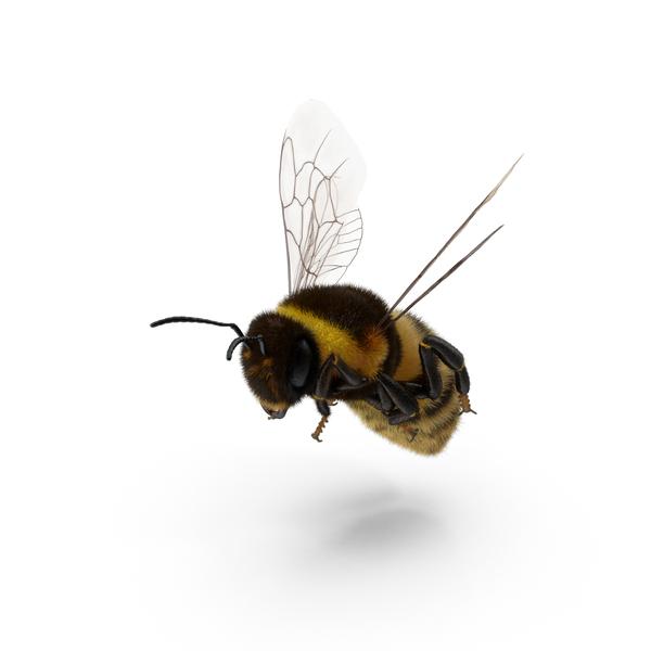 Bumblebee Object