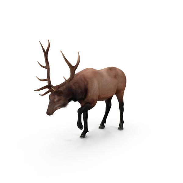 Elk Object